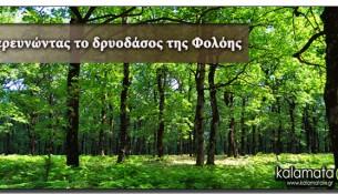 exormhsh-dasos-folohs-oreivatikos-kalamata
