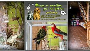 pet-shop-opws-o-skylos-me-tin-gata