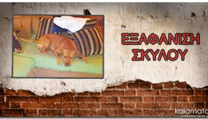 exafanisi-skylou-mplek