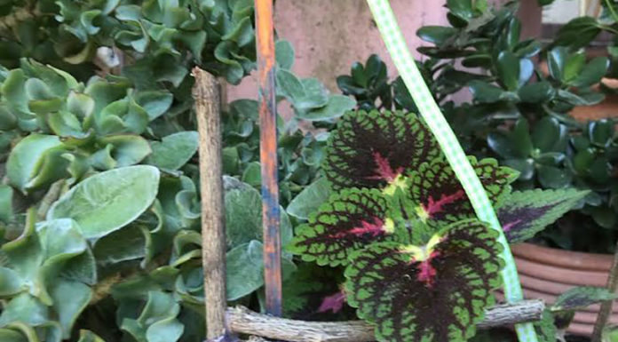 Καλοκαιρινά εκπαιδευτικά προγράμματα στο Αγρόκτημα Φοίφα