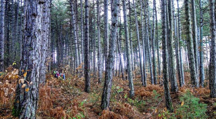 Στο παραμυθένιο μονοπάτι της Βλαχοκερασιάς θα βρεθεί ο Ορειβατικός Σύλλογος
